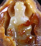 Carnelian Carved Crystal Kwan-yin
