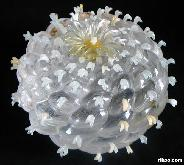 STUNNING Quartz Rock Crystal Carved Lophophora Cactus