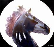 "Titan 13.4"" Agate Amethyst Geode Carved Crystal Horse Head Sculpture, Crystal Healing"